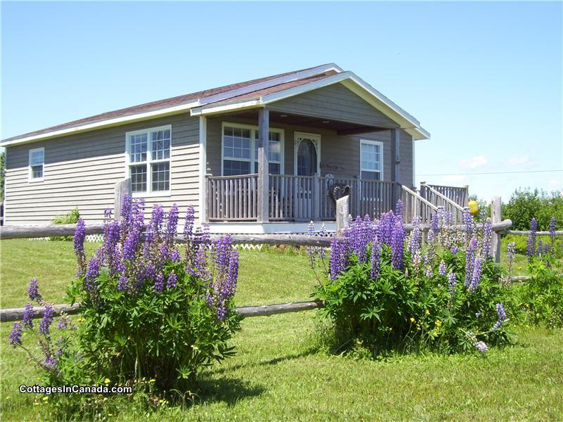 Peachy Down The Shore Canada Select 3 5 Argyle Shore Cottage Download Free Architecture Designs Viewormadebymaigaardcom