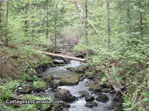 A small stream meanders through the forest, 2-3' at the deepest